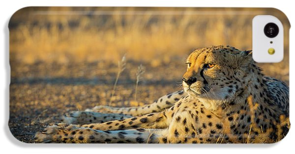 Reclining Cheetah IPhone 5c Case by Inge Johnsson