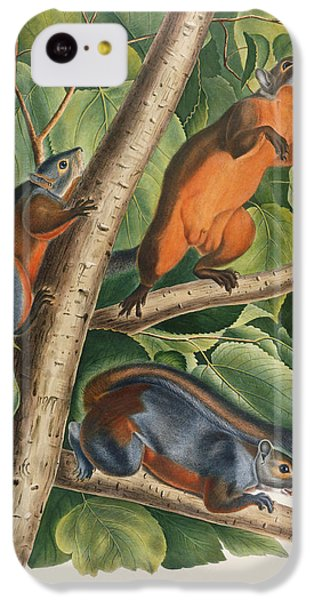 Red Bellied Squirrel  IPhone 5c Case by John James Audubon