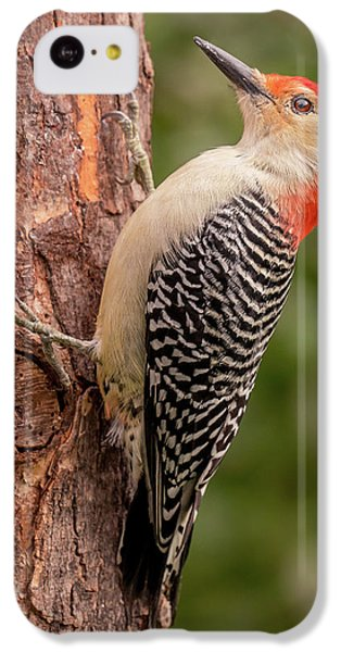 Red Bellied Woodpecker 3 IPhone 5c Case by Jim Hughes