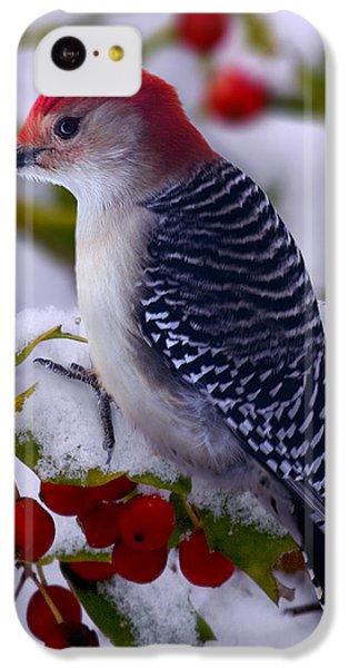 Woodpecker iPhone 5c Case - Red Bellied Woodpecker by Ron Jones
