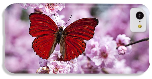 Red Butterfly On Plum  Blossom Branch IPhone 5c Case