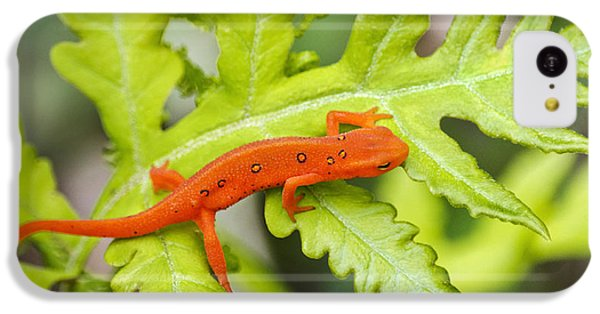 Red Eft Eastern Newt IPhone 5c Case
