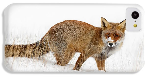 Red Fox In A Snow Covered Scene IPhone 5c Case