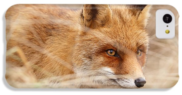 Red Fox On The Hunt IPhone 5c Case