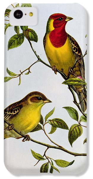 Red Headed Bunting IPhone 5c Case by John Gould