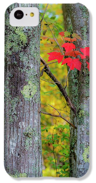 Red Leaves IPhone 5c Case