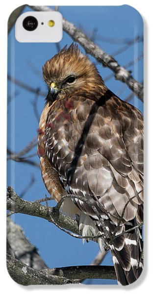 IPhone 5c Case featuring the photograph Red Shouldered Hawk 2017 by Bill Wakeley