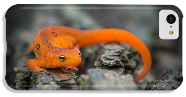 Red Spotted Newt IPhone 5c Case by Chris Bordeleau