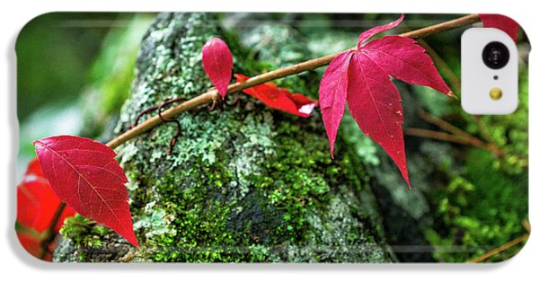 IPhone 5c Case featuring the photograph Red Vine by Bill Pevlor