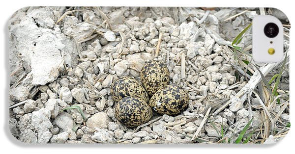 Red-wattled Lapwing Nest IPhone 5c Case by Fletcher & Baylis