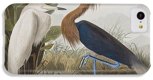 Reddish Egret IPhone 5c Case by John James Audubon