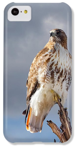 Redtail Portrait IPhone 5c Case by Bill Wakeley