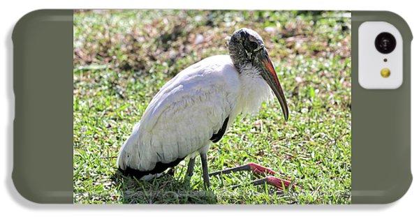 Resting Wood Stork IPhone 5c Case by Carol Groenen