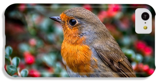 Robin Redbreast IPhone 5c Case by Adrian Evans