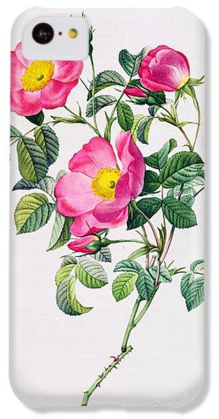 Rose iPhone 5c Case - Rosa Lumila by Pierre Joseph Redoute