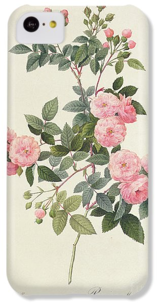 Rosa Multiflora Carnea IPhone 5c Case by Pierre Joseph Redoute