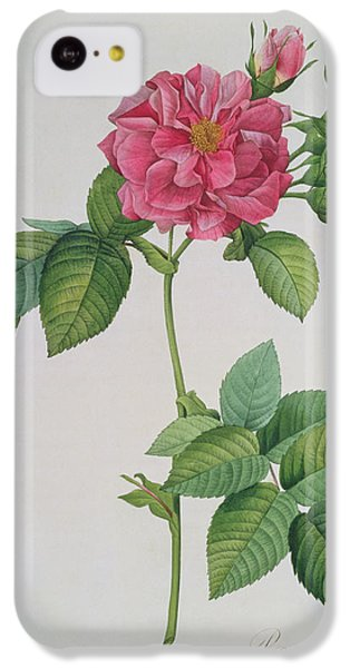 Rosa Turbinata IPhone 5c Case