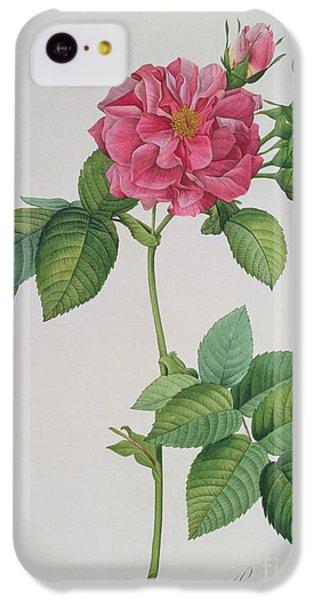 Rose iPhone 5c Case - Rosa Turbinata by Pierre Joseph Redoute