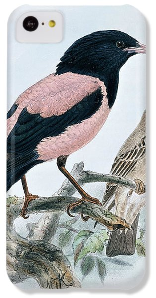 Starlings iPhone 5c Case - Rose Colored Starling by Johan Gerard Keulemans