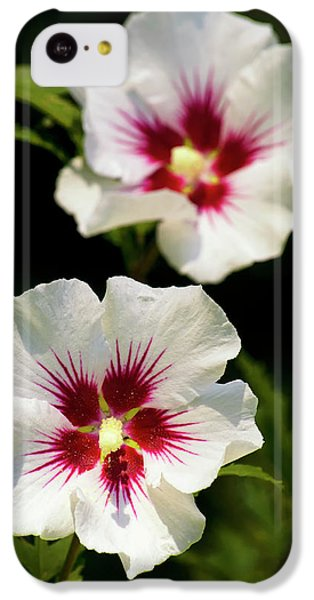 IPhone 5c Case featuring the photograph Rose Of Sharon by Christina Rollo