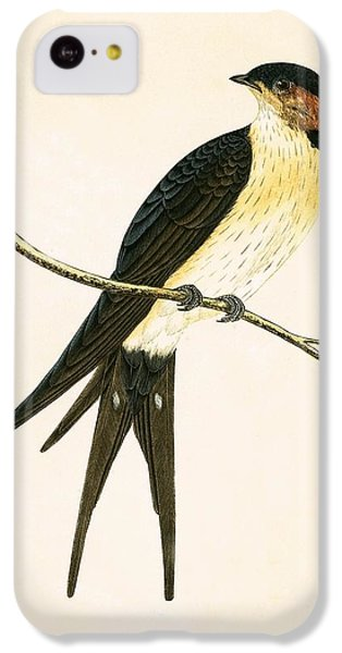 Rufous Swallow IPhone 5c Case by English School