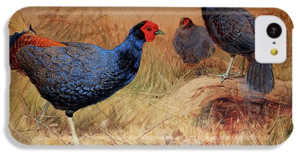 Rufous Tailed Crested Pheasant IPhone 5c Case