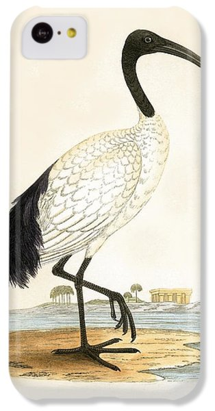 Sacred Ibis IPhone 5c Case