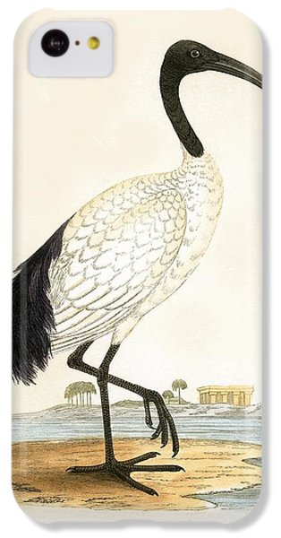 Sacred Ibis IPhone 5c Case by English School