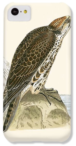 Saker Falcon IPhone 5c Case by English School