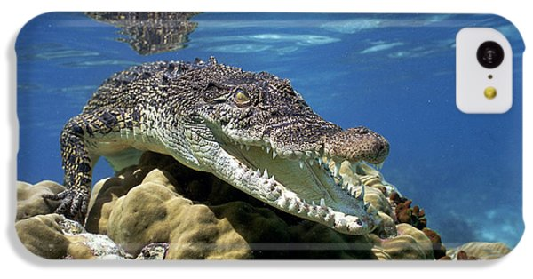 Saltwater Crocodile Smile IPhone 5c Case by Mike Parry