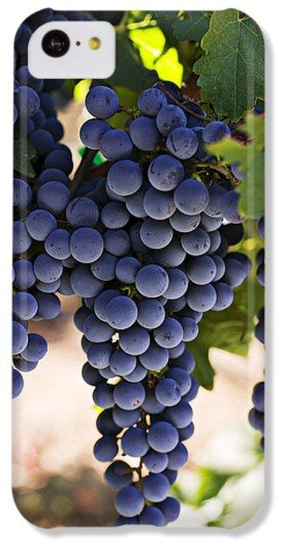 Sauvignon Grapes IPhone 5c Case by Garry Gay