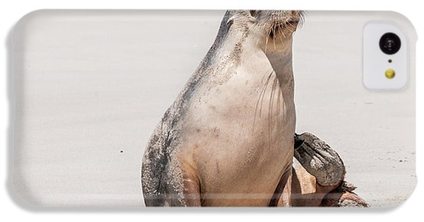Sea Lion 1 IPhone 5c Case by Werner Padarin