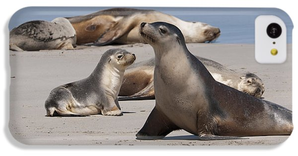 IPhone 5c Case featuring the photograph Sea Lions by Werner Padarin