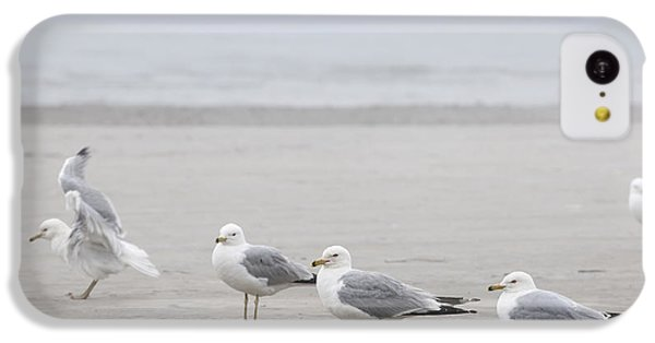 Seagulls On Foggy Beach IPhone 5c Case