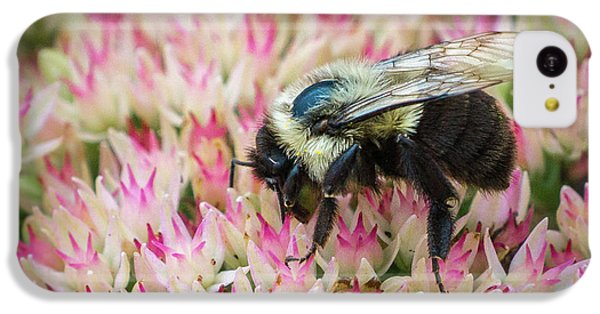 IPhone 5c Case featuring the photograph Sedum Bumbler by Bill Pevlor