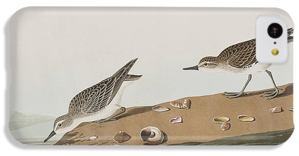 Semipalmated Sandpiper IPhone 5c Case by John James Audubon