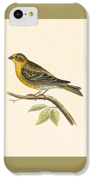 Serin Finch IPhone 5c Case by English School