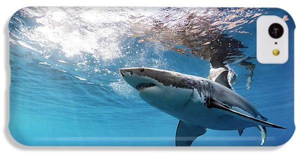 Shark Rays IPhone 5c Case by Shane Linke