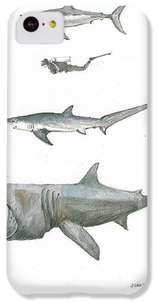 Hammerhead Shark iPhone 5c Case - Sharks In The Deep Ocean by Juan Bosco