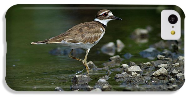 Killdeer iPhone 5c Case - Killdeer  by Douglas Stucky