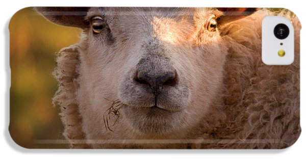 Sheep iPhone 5c Case - Silly Face by Angel Ciesniarska