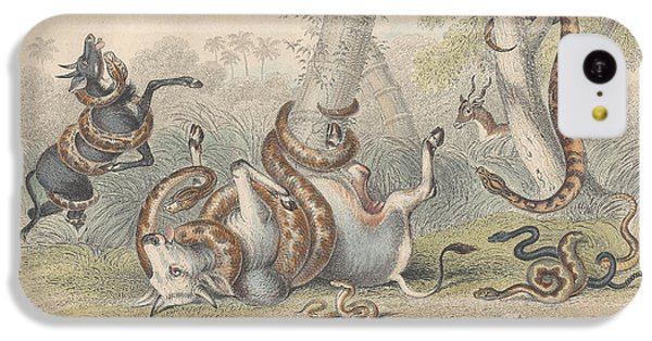 Snakes IPhone 5c Case by Anton Oreshkin
