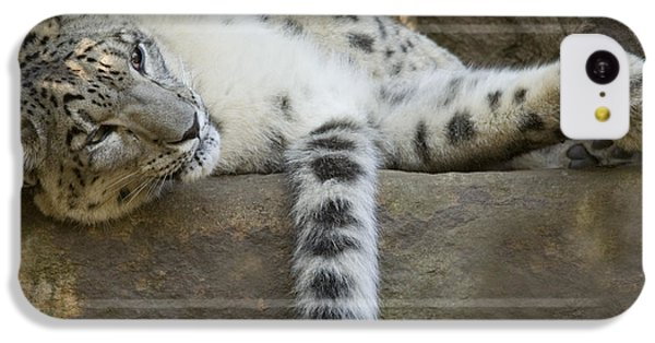 Snow Leopard Nap IPhone 5c Case by Mike  Dawson