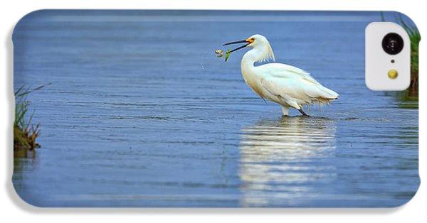 Snowy Egret At Dinner IPhone 5c Case