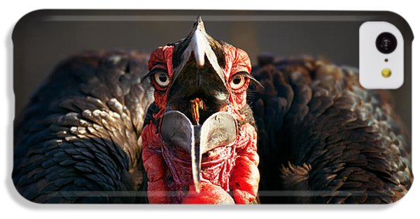 Southern Ground Hornbill Swallowing A Seed IPhone 5c Case