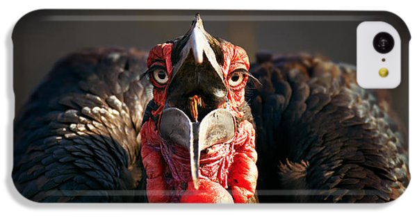 Southern Ground Hornbill Swallowing A Seed IPhone 5c Case by Johan Swanepoel