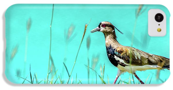 Southern Lapwing IPhone 5c Case