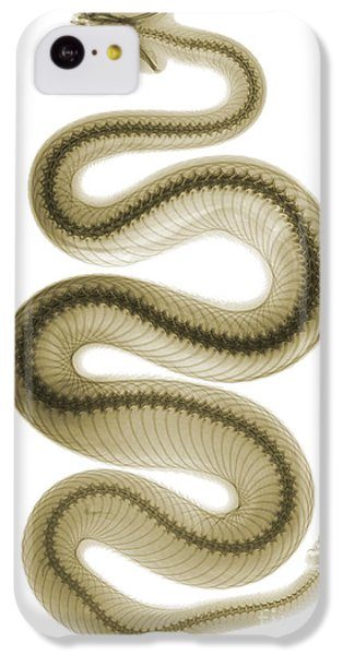 Southern Pacific Rattlesnake, X-ray IPhone 5c Case
