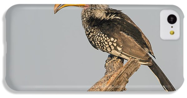 Hornbill iPhone 5c Case - Southern Yellow-billed Hornbill Tockus by Panoramic Images