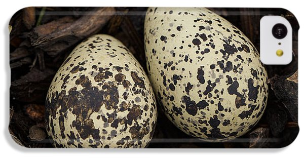 Killdeer iPhone 5c Case - Speckled Killdeer Eggs By Jean Noren by Jean Noren